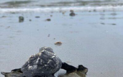 Nuestra playa, el habitat de tortugas marinas